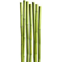Sticker XXXL 6x168cm motif au milieu des bambous